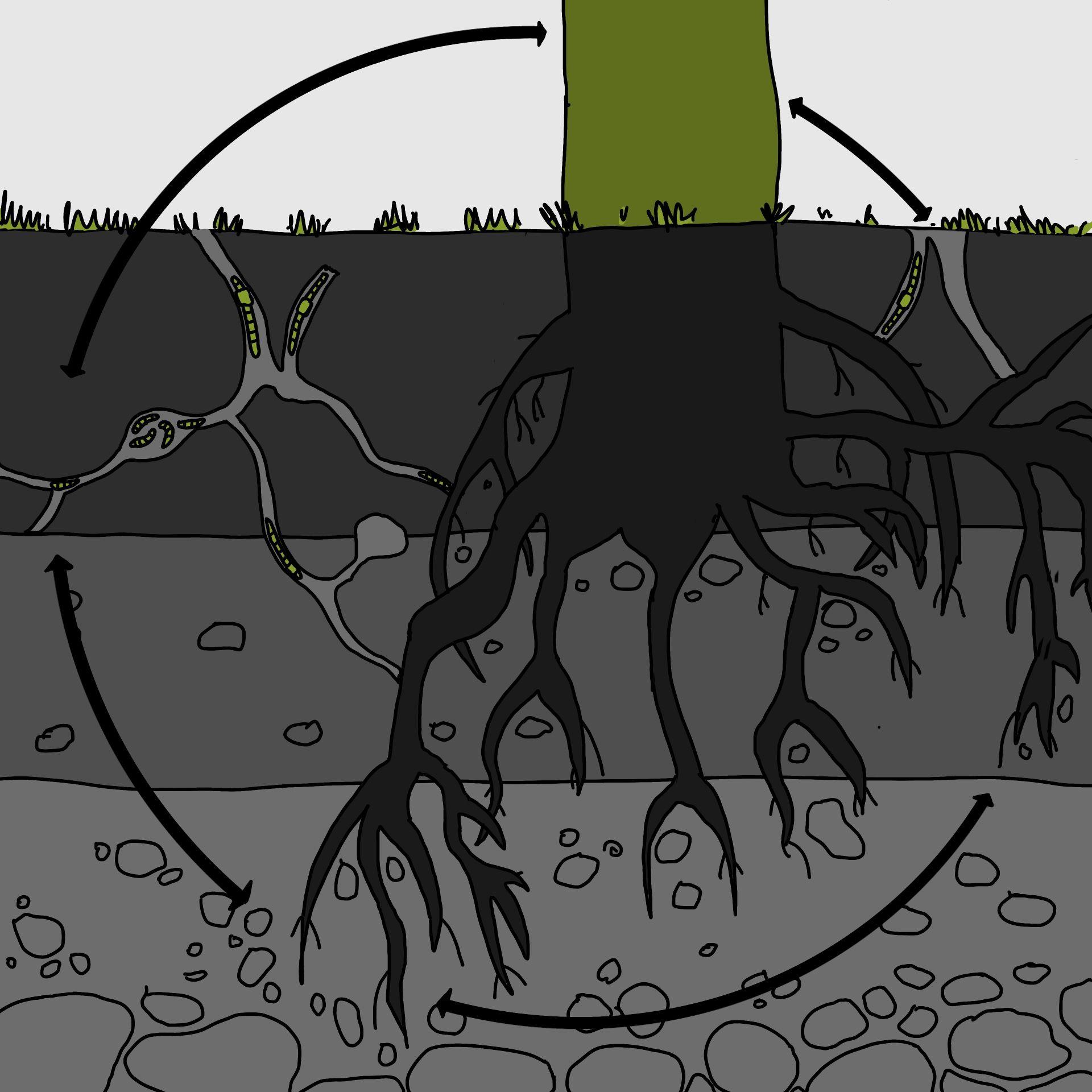 Bodenbildung2